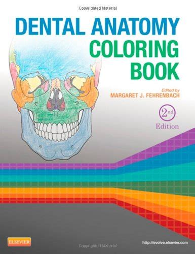 anatomy coloring book chapter 13 dental anatomy coloring book 2e