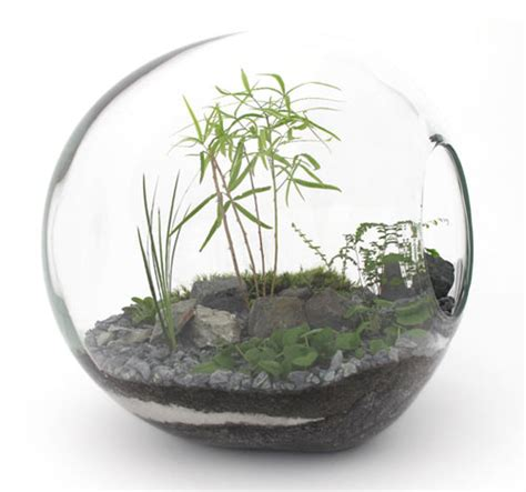 best plants for self contained terrarium terrarium design marvellous self contained terrarium self contained ecosystem sealed terrarium