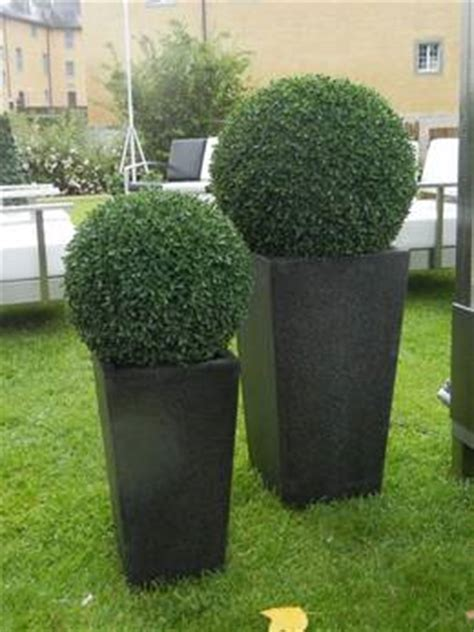kunstpalme aussenbereich kunstpflanzen f 252 r den aussenbereich 220 bersicht 1