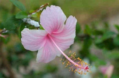 Bunga Bali Kembang Matahari 7 jenis tanaman hias bunga yang cocok ditanam di dataran