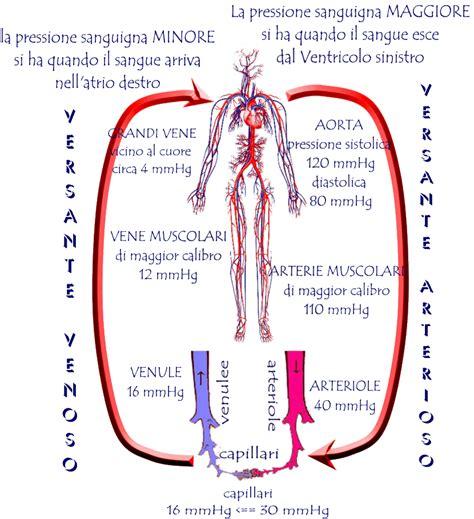 dilatazione vasi sanguigni salute e benessere marzo 2015