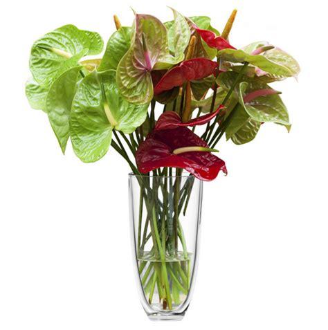 anthurium fiori fiori per dire grazie efiorista in italia ti