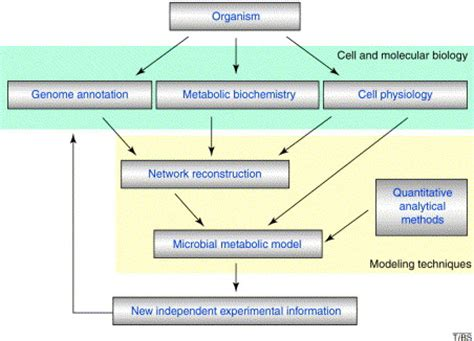 concept map of microbial metabolism