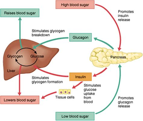 zzz_090_diabetes type 2 module 04