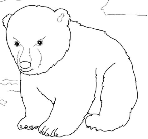 coloring page bear cub cute polar bear cub coloring page free printable