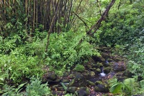 common plants in a tropical rainforest common plants tropical