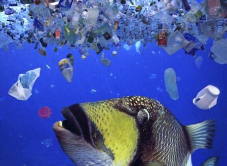 la grande isola di rifiuti del pacifico è ancora più