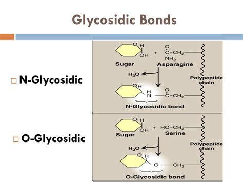 carbohydrates bonds carbohydrates structure and function ppt