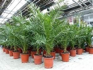 Große Zimmerpflanzen Kaufen 31 by Aloe Vera Groa Hautpflege Zimmerpflanze Zimmerpflanzen