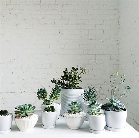 plants for home decor 9 gorgeous ways to decorate with plants the nectar collective