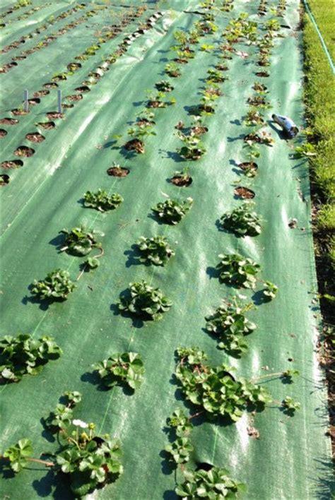 In The Garden Mat by The Power Of Mulch Garden Mats