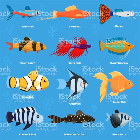 libro fish for life a peces de acuario y el oc 233 ano alimenta el recipiente submarino animales acu 225 ticos tropicales agua