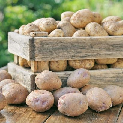 Kartoffeln Richtig Lagern 4999 by Kartoffeln Richtig Lagern Seitenbacher De