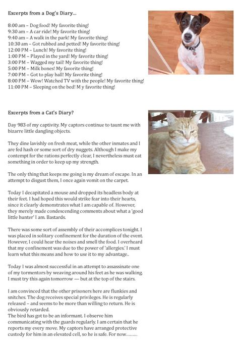 vs cat diary excerpts from a cat and s diary from breaking cat news and