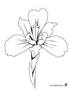 Iris Outline 10 images about line drawings of irises on iris iris flower tattoos and