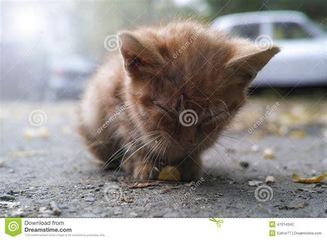 collant bagnati chaton abandonn 233 photo stock image 47014342
