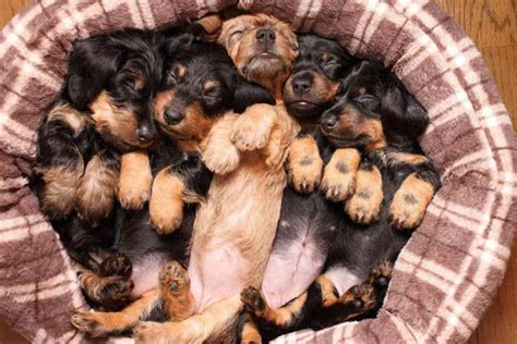 basket of puppies basket of puppies favorite things