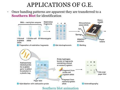 Genetic Engineering 13 genetic engineering bw