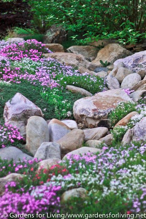 Flowers For Rock Gardens Creeping Phlox Rock Garden Rock Gardens Ground Covers Pinterest Gardens Perennial