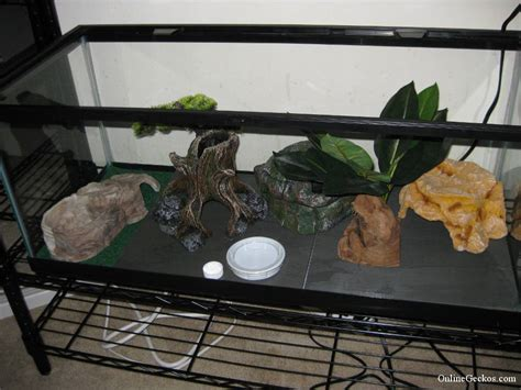 basic leopard gecko tank setup leopard geckos  sale