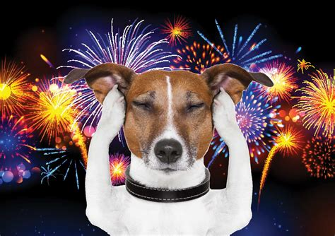 dogs and fireworks post behavioural therapists and obedience for