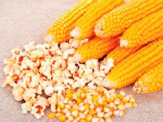 membuat popcorn  jagung mentah pakar budidaya