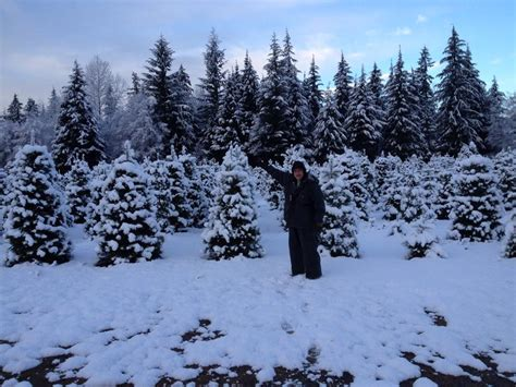 best 28 snohomish county christmas tree farms tree