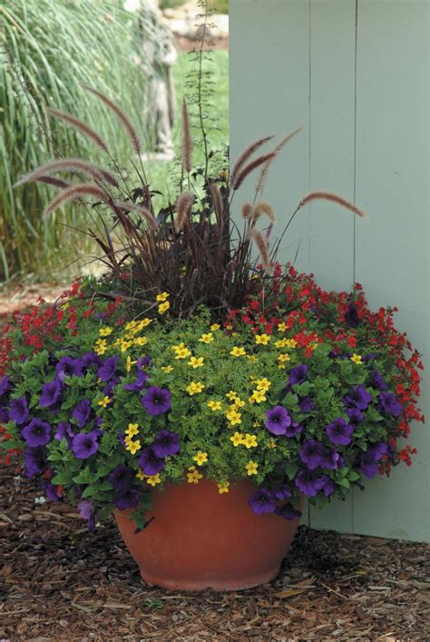 container gardens for sun purple grass petunia nemesia and bidens