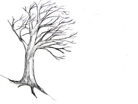 how to draw a doodle tree how to draw a tree