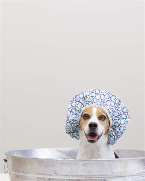 how often bathe puppy how often does my need a bath baths how often do dogs need baths bathing