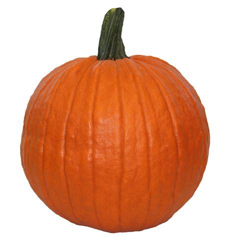 get carving pumpkins for only 1 at lowes reg 4 7