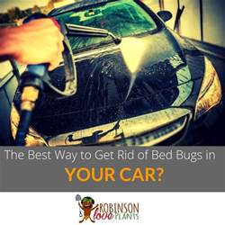 what is the best way to get rid of bed bugs in your car