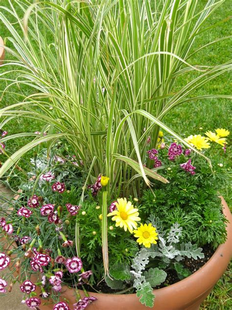 perennial container garden a drought tolerant ornamental grass and flower container