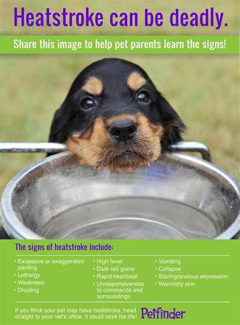 heat l for dogs of veterinary hospice heat stroke in dogs and cats