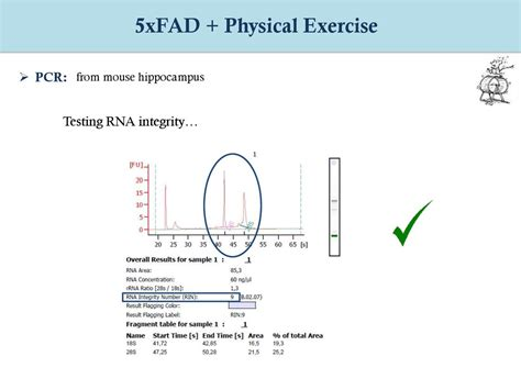8 Negative Effects Of Exercise by Effects Of Physical Exercise In Ageing And Alzheimer S