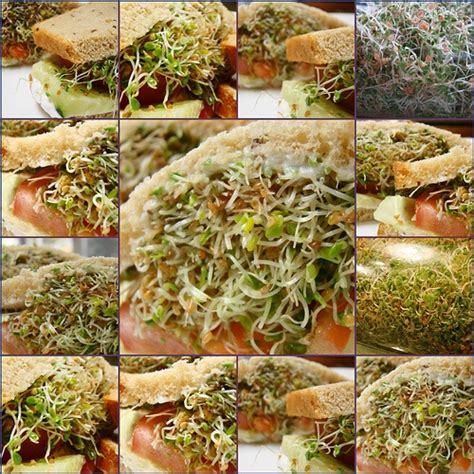 10 best images about sprouts on hemp seeds