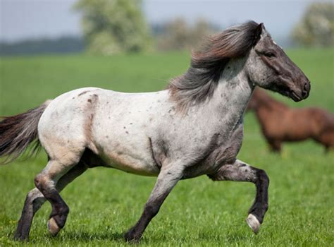 Rose Paint Colors by Real Horse Colors And Equine Color Genetics