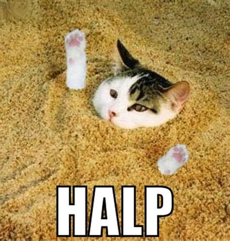 Help Meme - best cat jokes on the internet world greatest kittens