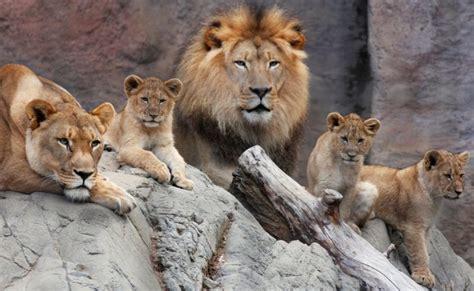 Home Decor Sacramento by Lion Family