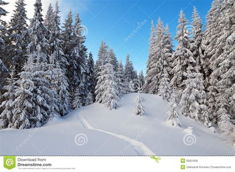 frosty forest royalty free stock winter landscape with a forest path stock photo image