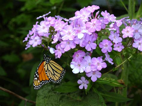 butterflies flowers wordsworth poem for butterflies fascination meditation