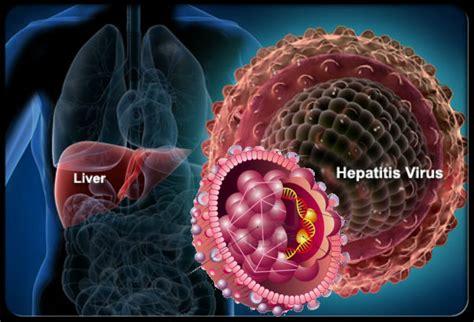 Qnc Jelly Gamat Buat Hepatitis B obat tradisional hepatitis apotek jelly gamat qnc