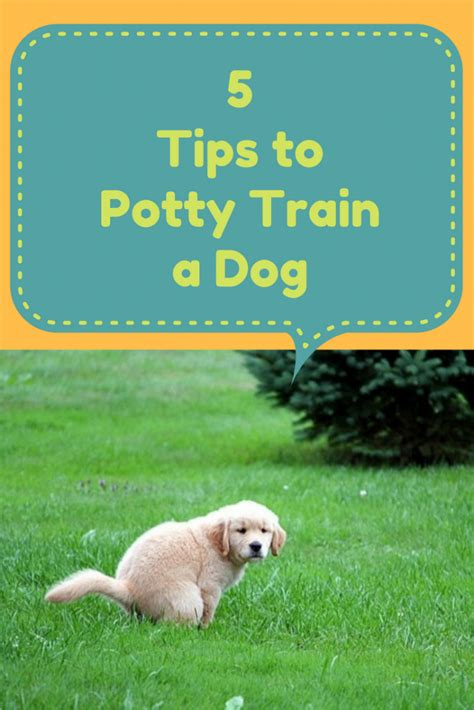 potty puppy tips 5 tips to potty a care