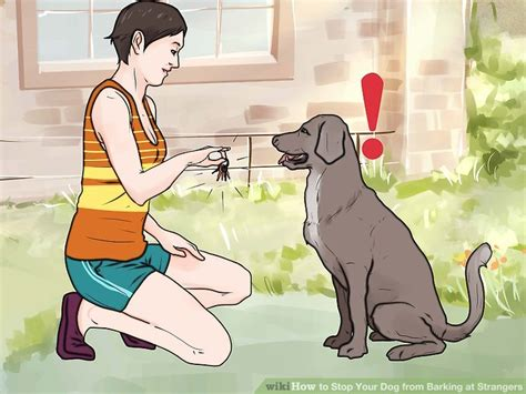 how to your to stop barking at strangers how to stop your from barking at strangers 11 steps