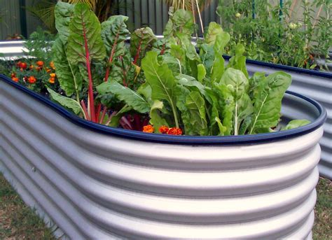 vegetable bed joey s place my water tank raised vegetable garden beds