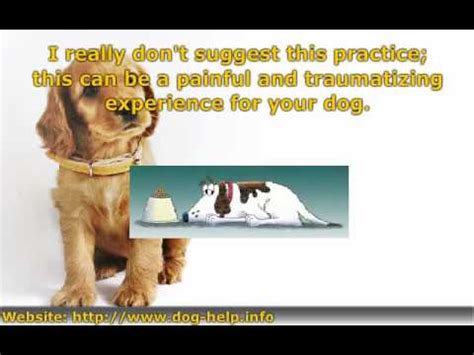 declawing dogs is declawing or bad for your
