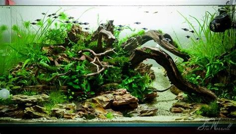 design aquascape online aquascape by photographer stu worrall aquarium