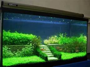 25 best aquascaping ideas on aquarium
