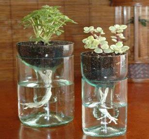 menanam cabe hidroponik sistem wick 6 teknik budidaya hidroponik sederhana rumah dan kebun