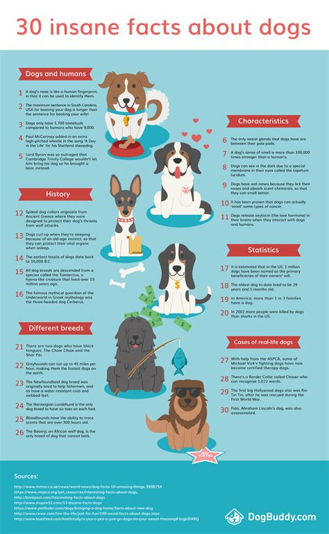 facts about dogs and puppies 30 facts about dogs infographic dogbuddy